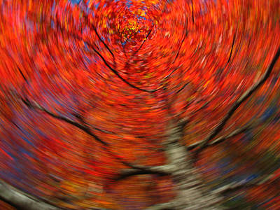 Abstract Movement Photograph - Fall Tree Carousel by Juergen Roth