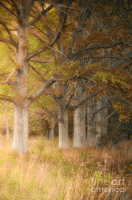 Photograph - Fall Tree Colors The Pines by Peggy Franz