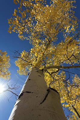 Fall Tree Art Print by David Yack