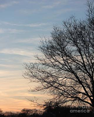 Photograph - Fall Tree In Dusk Sky by Bill Woodstock