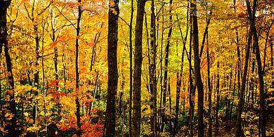 Fall Tree Panorama Print by Mela Luna