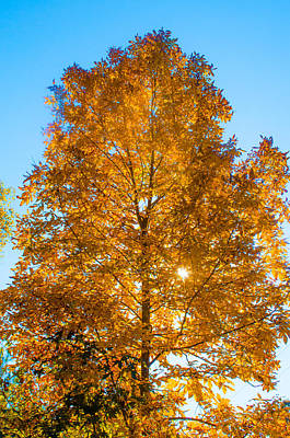 Photograph - Fall Tree by Parker Cunningham