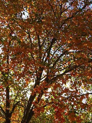 Photograph - Fall Tree by Teresa Cox