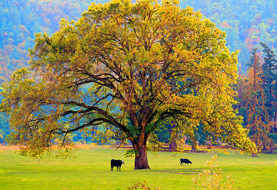 Fall Tree With Two Cows Art Print
