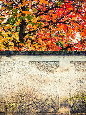 Photograph - Fall Tree With Wall by Silvia Ganora