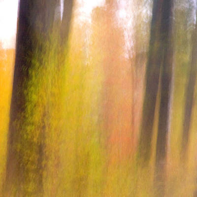 Adjectives Photograph - Fall Trees And Leaves With Motion Blur by Dennis Fast / Vwpics