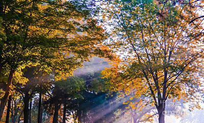 Fall Trees Art Print
