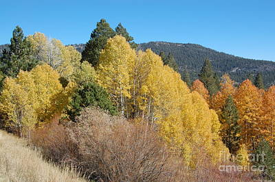 Photograph - Fall Trees by Debra Thompson