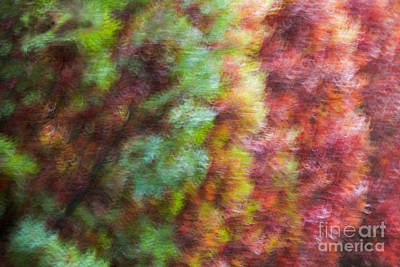 Photograph - Fall Trees Impressions by Sonya Lang