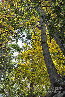 Photograph - Fall Trees by Jeannette Hunt