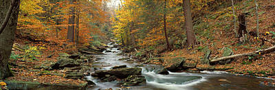 Fall Trees Kitchen Creek Pa Art Print by Panoramic Images