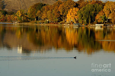 Photograph - Fall Trees Refections by Tina Hailey