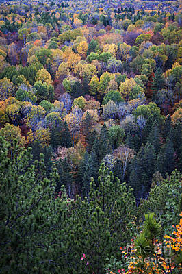 Algonquin Photograph - Fall Treetops At Lookout by Elena Elisseeva