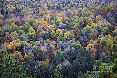 Photograph - Fall Treetops by Elena Elisseeva