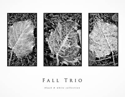 Photograph - Fall Trio Black And White Collection by Greg Jackson