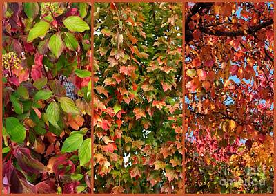 Photograph - Fall Trio Collage by Carol Groenen