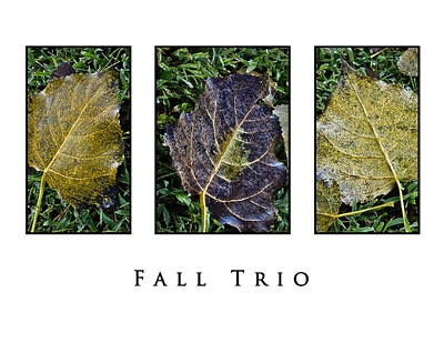 Photograph - Fall Trio Edition No. 1 by Greg Jackson