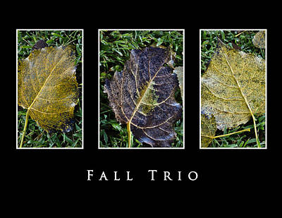 Photograph - Fall Trio Edition No. 2 by Greg Jackson