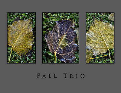 Photograph - Fall Trio Edition No. 3 by Greg Jackson