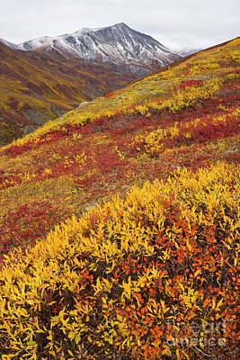Photograph - Fall Tundra And First Snow  by Yva Momatiuk John Eastcott
