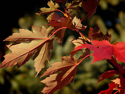 Photograph - Fall Underside Beauty by Lucinda Walter