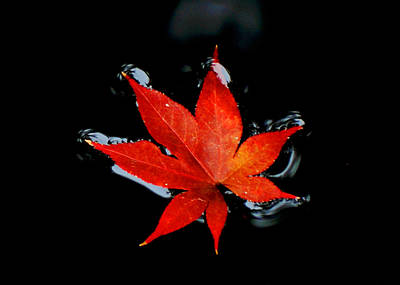 Photograph - Fall by Val Stone Creager