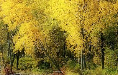 Photograph - Fall by Vickie Szumigala