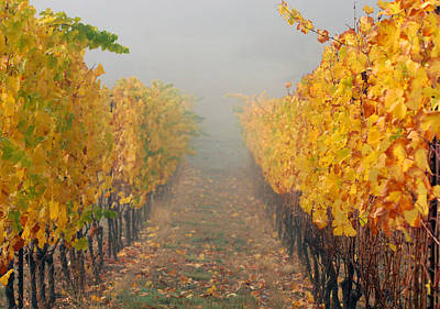 Photograph - Fall Vines by Jean Noren