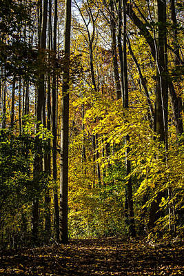 Fall Walk In The Woods Art Print