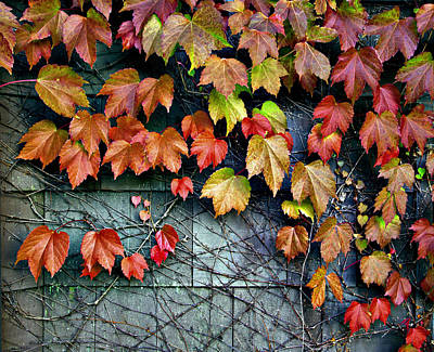 Photograph - Fall Wall by Kjirsten Collier