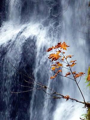 Photograph - Fall Waterfall  by Susan Garren