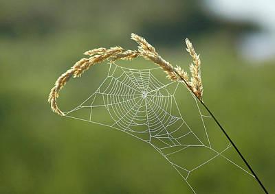 Fall Web Print by Annie Pflueger