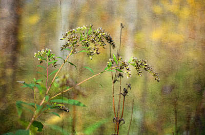 Photograph - Fall Wild Flower by Michael Colgate
