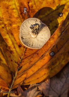 Mushroom Photograph - Fall Wild  Mushroom by LeeAnn McLaneGoetz McLaneGoetzStudioLLCcom