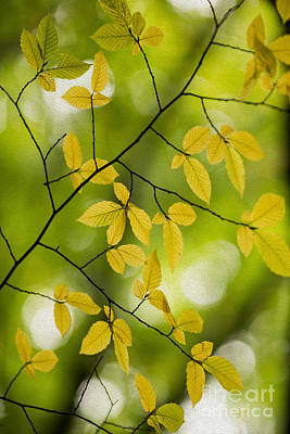Photograph - Fall Yellow Leaves 3 by Rebecca Cozart