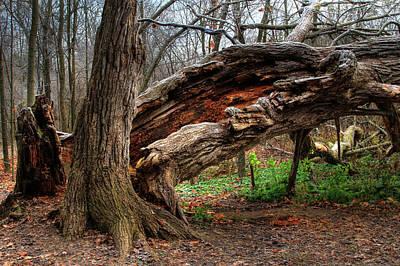 Photograph - Fallen 1 by Jim Vance