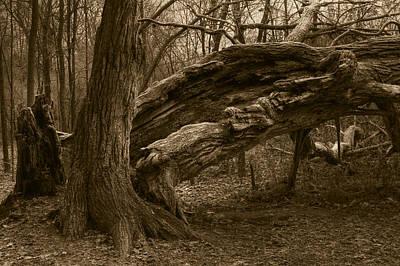 Photograph - Fallen 2 by Jim Vance