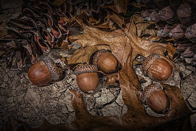 Photograph - Fallen Acorns by Randall Nyhof