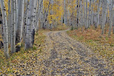 Dirt Roads Photograph - Fallen Aspen Leaves In Fall Keebler by Darrell Gulin