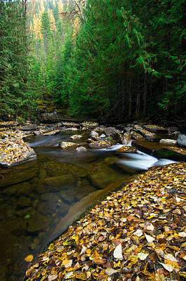 Contemplative Photograph - Fallen Autumn Color Leaves And Forest by Panoramic Images