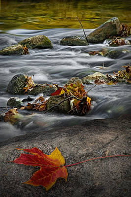 Photograph - Fallen Autumn Leaf On A Rock By The Thornapple River by Randall Nyhof