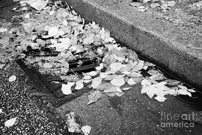 fallen autumn leaves blocking storm water run off drain Vancouver BC Canada Print by Joe Fox