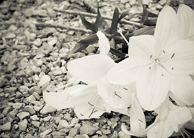 Photograph - Fallen Bouquet by BandC  Photography