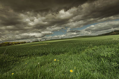 Pasture Scenes Photograph - Fallen by Chris Fletcher