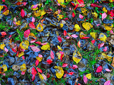 Photograph - Fallen Colors by Third Eye Perspectives Photographic Fine Art