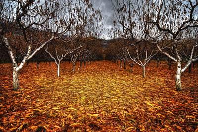 Wesley Allen Photograph - Fallen Fruit by Wesley Allen Shaw