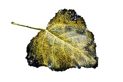 Fallen Leaf 1t Art Print by Greg Jackson