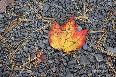 Art Print featuring the photograph Fallen Leaf by Dora Sofia Caputo Photographic Art and Design