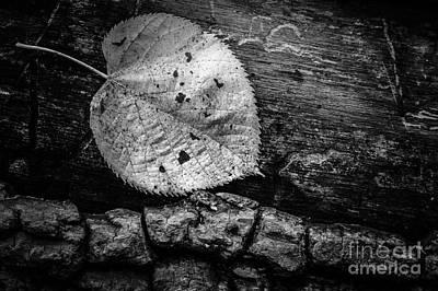 Photograph - Fallen Leaf Fallen Tree by Michael Arend