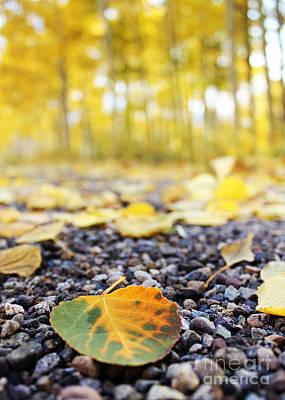 Fallen Leaf Art Print